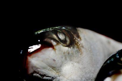 fish-01.jpg