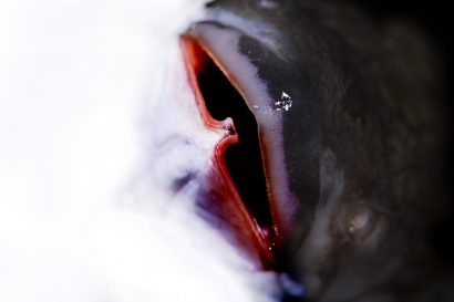 fish-02.jpg